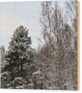 Snowy Forest Edge Wood Print