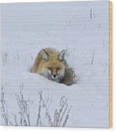 Snowy Fox Wood Print