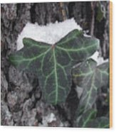 Snowy Ivy Wood Print