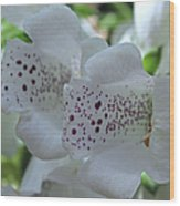 Snowy Mountain Digitalis Wood Print