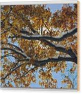 Snowy Oak Wood Print