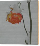Snowy Orange Rose Wood Print