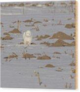Snowy Owl 2016-9 Wood Print