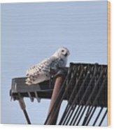 Snowy Owl 2959 Wood Print