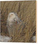 Snowy Owl In Grass Wood Print