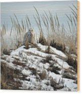 Snowy Owl In The Dunes Wood Print