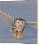 Snowy Owl Last Light Wood Print