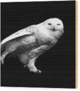 Snowy Owl Wood Print by Malcolm MacGregor