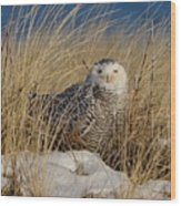Snowy Owls On The Beach Wood Print