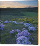 Snowy Phlox Sunset Wood Print