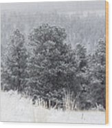 Snowy Pines In The Pike National Forest Wood Print