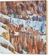 Snowy Queen's Garden  Wood Print