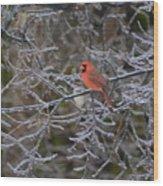 Snowy Red  Wood Print