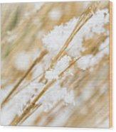 Snowy Weed Wood Print