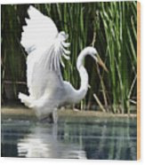 Snowy White Egret In The Wetlands Wood Print