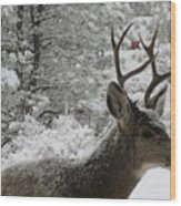 Snowy Young Buck Wood Print