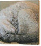 Snugglepuss Wood Print