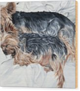 Snuggling Yorkies Wood Print