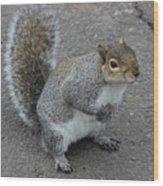 So.... Got Nuts? Wood Print