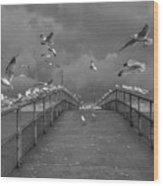 So Many Gulls Wood Print