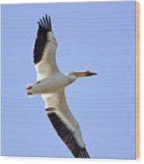 Soaring American White Pelican Wood Print