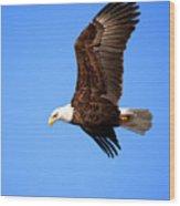Soaring Bald Eagle Wood Print