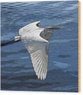Soaring Egret Wood Print