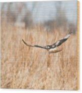 Soaring Hawk Over Field Wood Print by Douglas Barnett