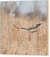 Soaring Hawk Over Field Wood Print