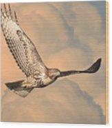 Soaring Hawk Wood Print by Wingsdomain Art and Photography