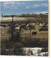 Soaring In Montana Wood Print