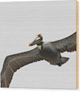 Soaring Pelican Beauty Wood Print