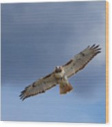 Soaring Red Tail Square Wood Print