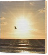 Soaring Seagull Sunset Over Imperial Beach Wood Print