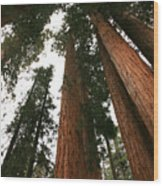 Soaring Sequoias Wood Print