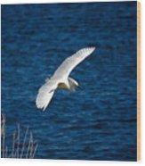 Soaring Snowy Egret  Wood Print