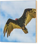 Soaring Vulture Wood Print