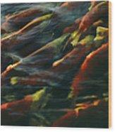 Sockeye Salmon Swim Upstream To Spawn Wood Print