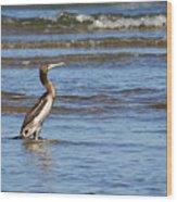 Socotra Cormorant Wood Print