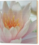 Soft And Delicate Water Lily Wood Print