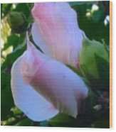 Soft And Gentle Rose Of Sharon Wood Print