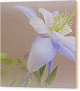 Soft And Lovely Columbine Flower Wood Print
