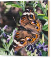 Soft Butterfly Wood Print