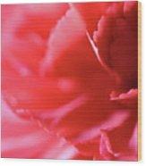 Soft Carnation Petals Wood Print