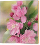 Soft Apple Blossom Wood Print