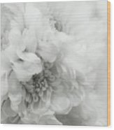 Soft Dahlia White Wood Print