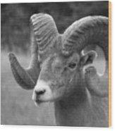 Soft Finish Ram Wood Print