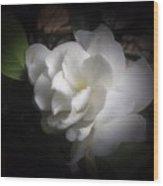 Soft Focus Gardenia Wood Print