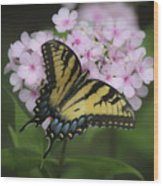 Soft Focus Tiger Swallowtail Wood Print