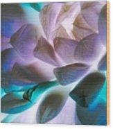 Soft Glow Succulents Wood Print